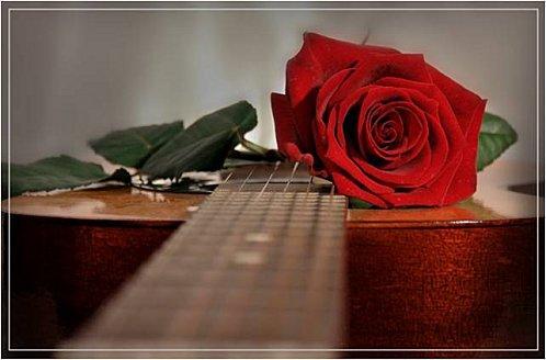 rose-et-guitare
